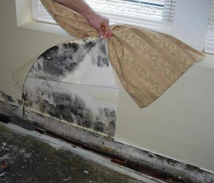 Mold Remediation What's Behind That Wallpaper?