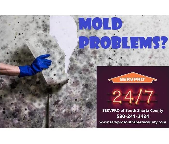 MOLD PROBLEMS?
